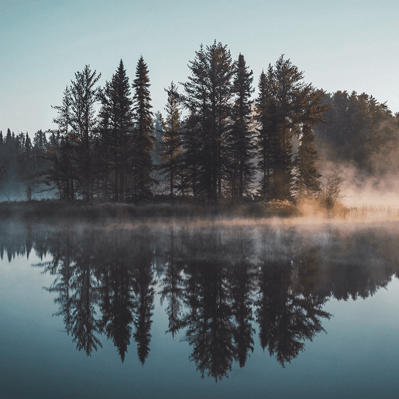 Forest Owls & Lake Dreamers