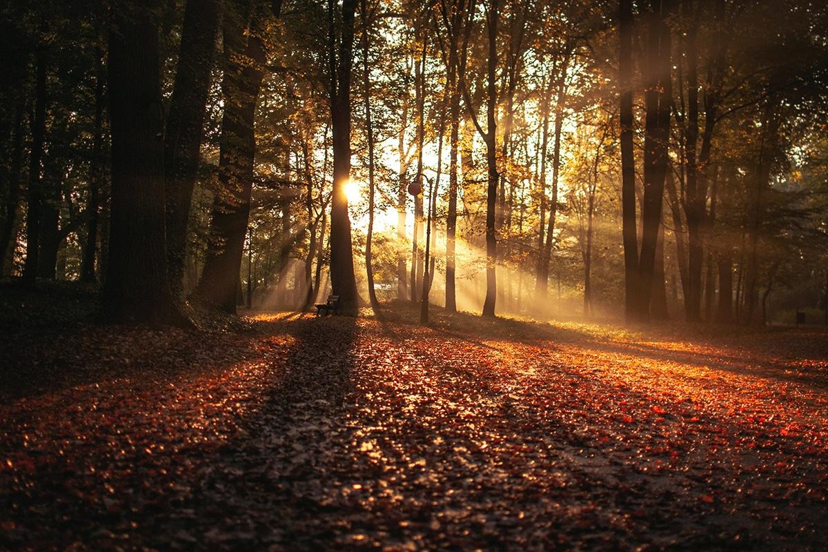 Mabon - die Herbst-Tag-und-Nachtgleiche